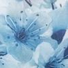Cream Blue